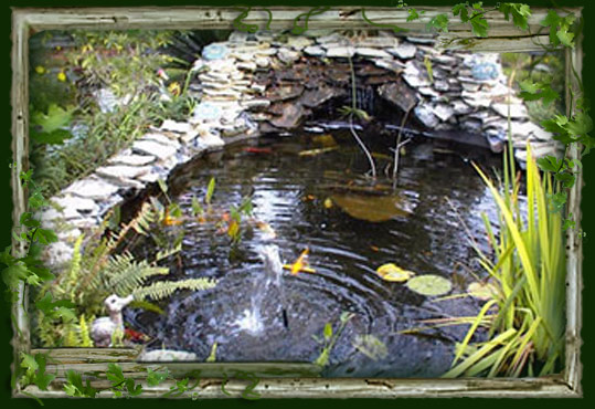 7 koi pond pictures for Koi dealers near me